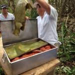 preparando-cochinita-pibil-2
